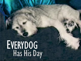 Everydog Has His Day